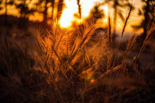Zomer zonsondergang weide