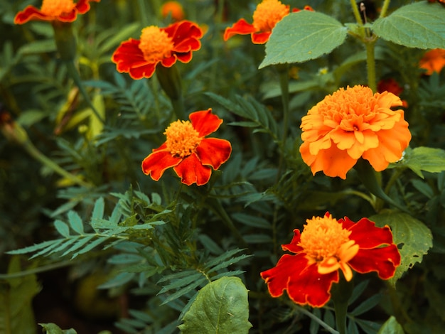 Zomerachtergrond, mooi groeiende gele bloemen in de tuin