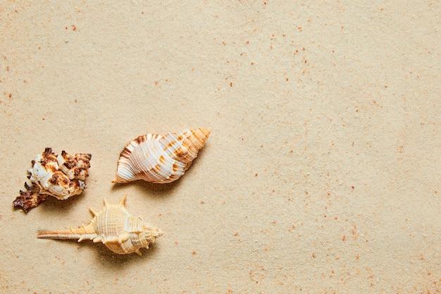 Zomerachtergrond van zand en exotische zeeschelpen met kopieerruimte
