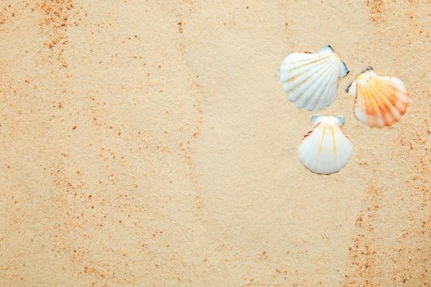 Zomerachtergrond van zand en zeeschelpen met kopieerruimte