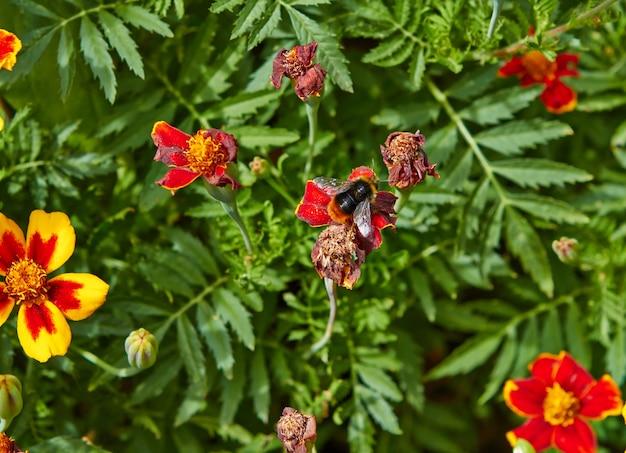 Zomerbloeiende bloemen in arnhem. nederland juli 2018