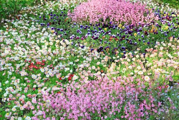 Zomerbloembed van madeliefjes, violet en