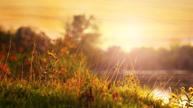 Zomerlandschap met de rivier tijdens zonsondergang in gouden tinten