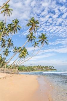 Zomerlandschap met palmbomen aan de oever van de stille oceaan.