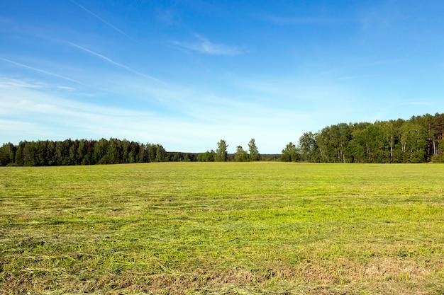 Zomerlandschap op het veld, waar het hooi wordt gemaakt van gras voor de winterperiode,