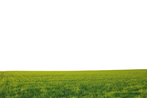 Zomerlandschapsveld met groen gras en horizon