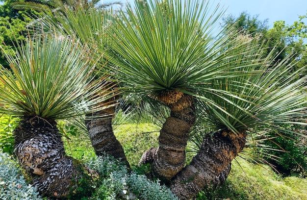 Zomerpark met palmbomen.
