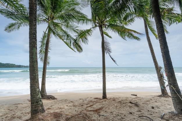 Zomerseizoen achtergrond verbazingwekkende kokospalmen mooie natuurlijke tropische achtergrond prachtige natuur of reizen website achtergrond.