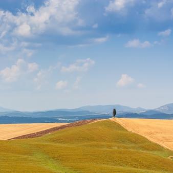 Zomerseizoen in het toscaanse land, dichtbij siena