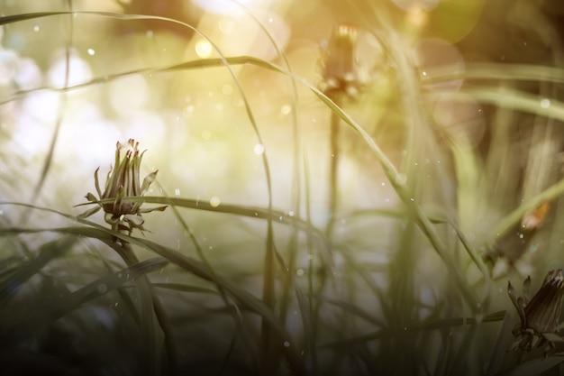 Zomerweide met madeliefjes, natuurschatten. groene heksenachtergrond, mystieke lichte textuur