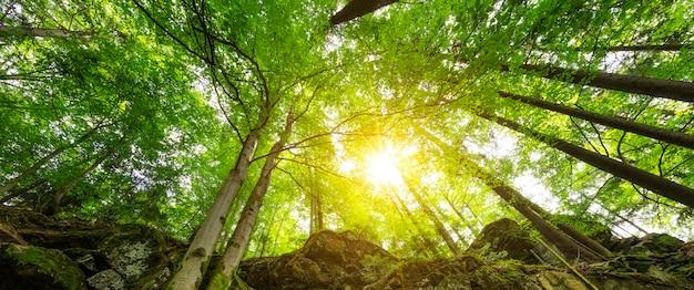 Zon in het bos, frankrijk