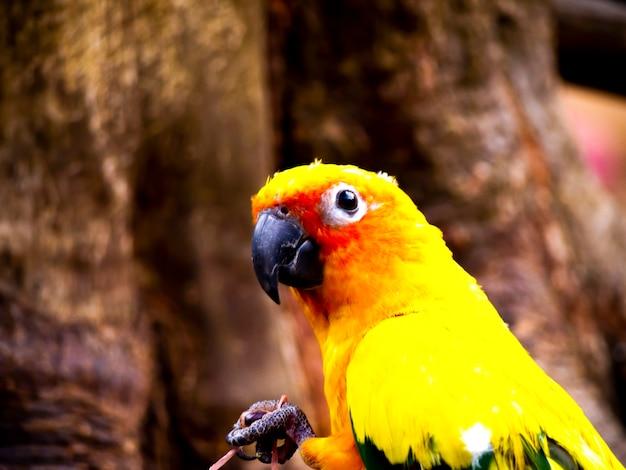Zon papegaaiachtigen papegaai vogels op hout