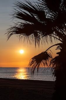 Zon stijgt boven de zee met een palmboom op de voorgrond