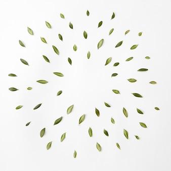 Zon van bladeren op wit wordt geïsoleerd. plat leggen. rond frame