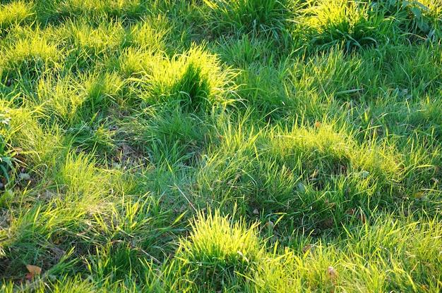 Zonbezinning in het gras