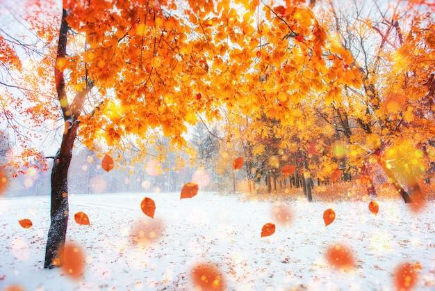 Zonlicht breekt door de herfstbladeren van de bomen in de ea