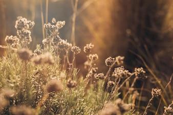 Zonlicht op dode bloemen