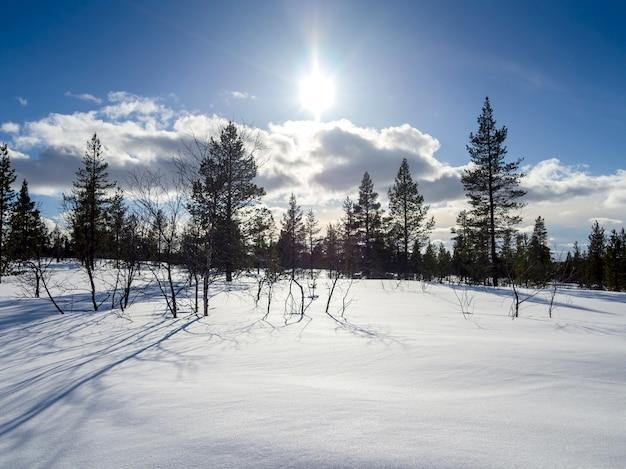 Zonlicht over een mooi de winterbos dat van sneeuw in finland wordt behandeld