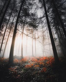 Zonlicht schijnt door het mistige bos