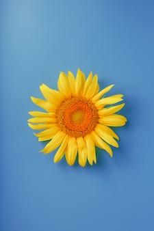Zonnebloem bloem op een blauw.