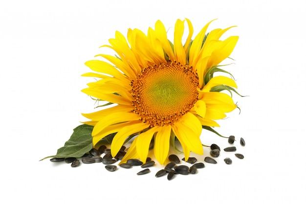Zonnebloem en zaden op wit