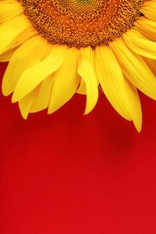 Zonnebloem geel op een rood.