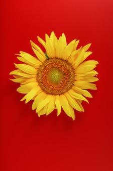 Zonnebloem geel op rood