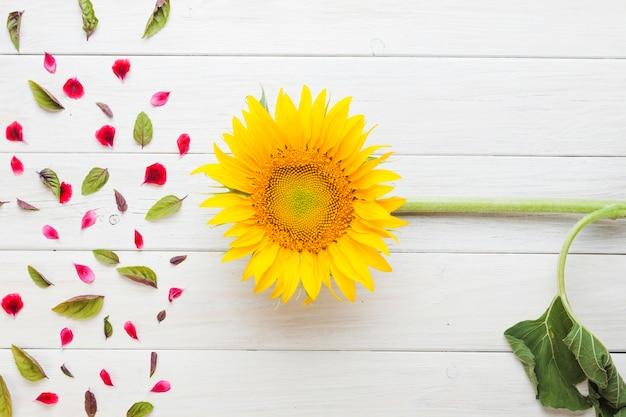 Zonnebloem geplaatst bij bloemblaadjes