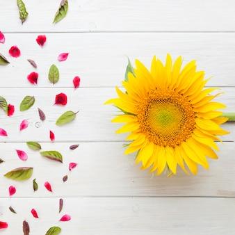 Zonnebloem met bloemblaadjes en bladeren