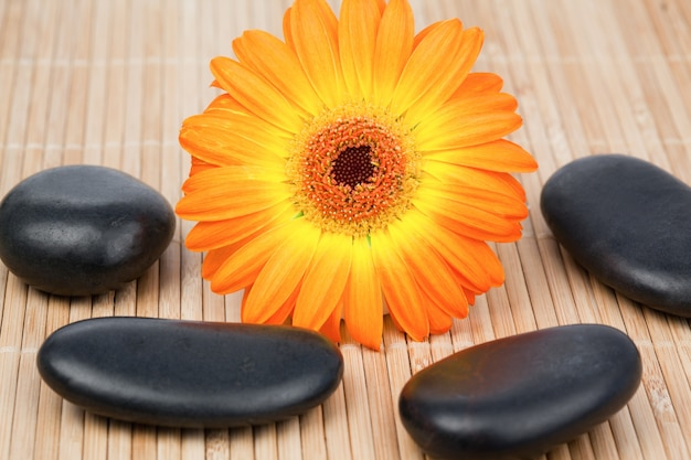 Zonnebloem omringd door zwarte stenen