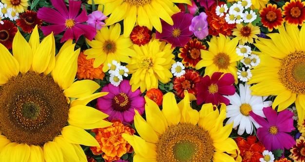 Zonnebloemen, bovenaanzicht. textuur van de verschillende bloemen.
