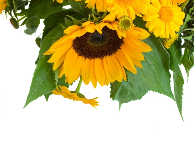 Zonnebloemen en goudsbloem bloemen boeket geïsoleerd