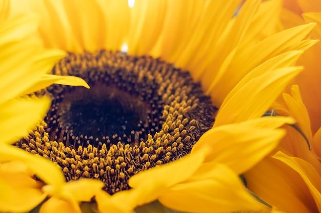 Zonnebloemen in de zon