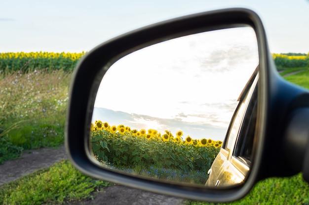 Zonnebloemen weerspiegeld in een achteruitkijkspiegel