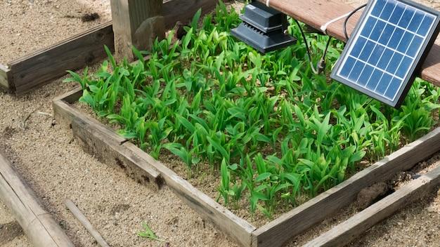 Zonnecel die energie levert aan lamp in boerderij.