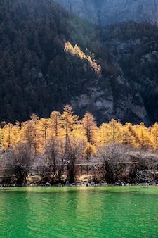 Zonneschijn op gouden pijnboombos met smaragdgroen meer