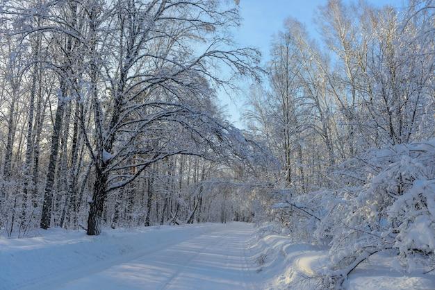 Zonnestralen breken door de met sneeuw bedekte takken van bomen. concept van winterreizen tijdens de nieuwjaarsvakantie.