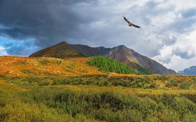 Zonnestralen op een herfstbergdal met een vliegende roofvogel. dramatisch herfstlandschap met gouden bergzon en veelkleurige bergen.
