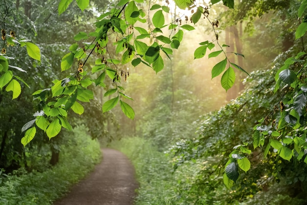 Zonnestralen schijnen door de bladeren van de bomen in het park en verlichten de onverharde weg