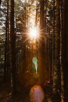 Zonnestralen tussen het bos bij zonsopgang