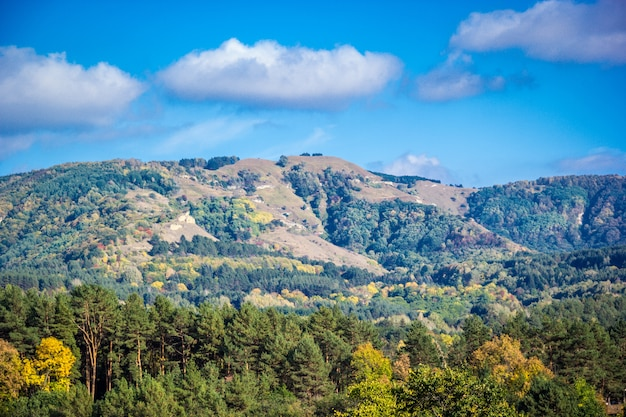 Zonnig de herfstlandschap met dennenbos en uitlopers