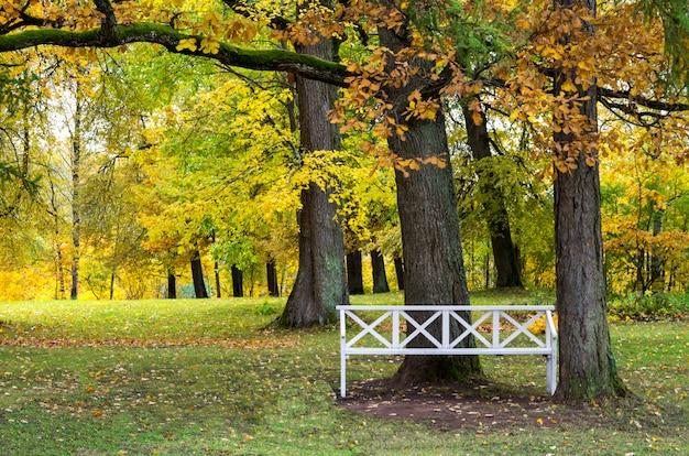 Zonnig herfst stadspark en lege bank
