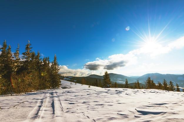 Zonnig landschap van pluizige sparren die tussen sneeuwbanken groeien tegen een achtergrond van heuvelsbos