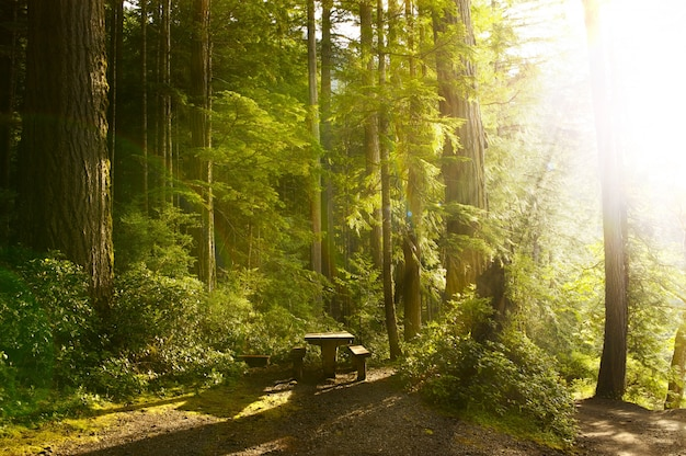 Zonnig regenwoud
