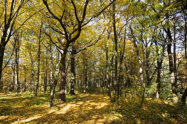 Zonnig weer in het herfstseizoen in het park, mooi helder herfstweer in de natuur