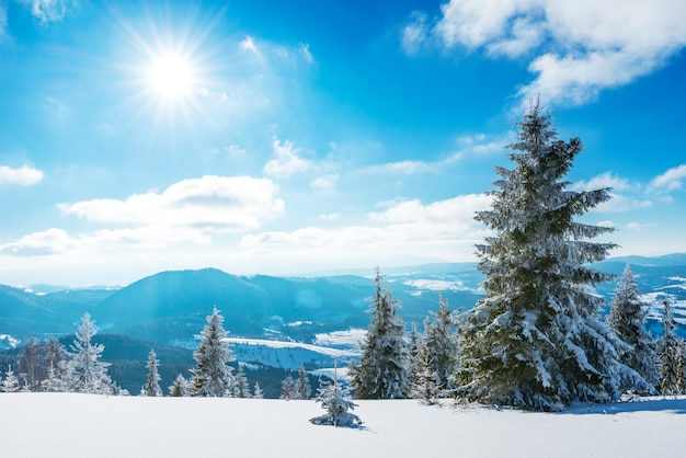 Zonnig winterlandschap van sneeuwlaag op de achtergrond van een slank naaldbos op een ijzige winterdag. het concept van zuiverheid en ongerepte natuur van de noordelijke natuur. copyspace