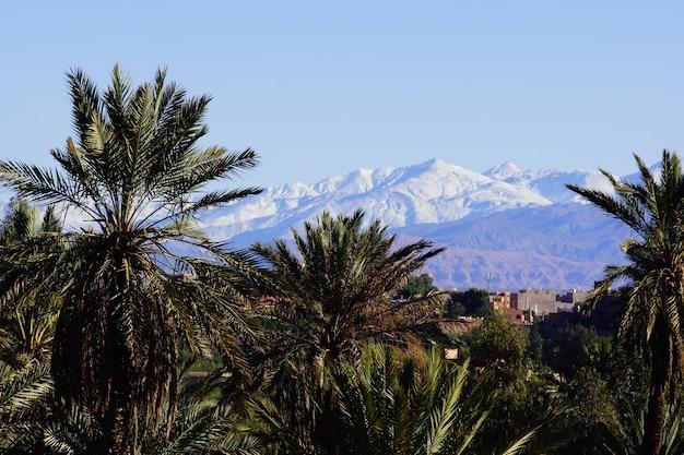 Zonnige dag herberg het palmbos met het atlasgebergte vol sneeuw in de rug