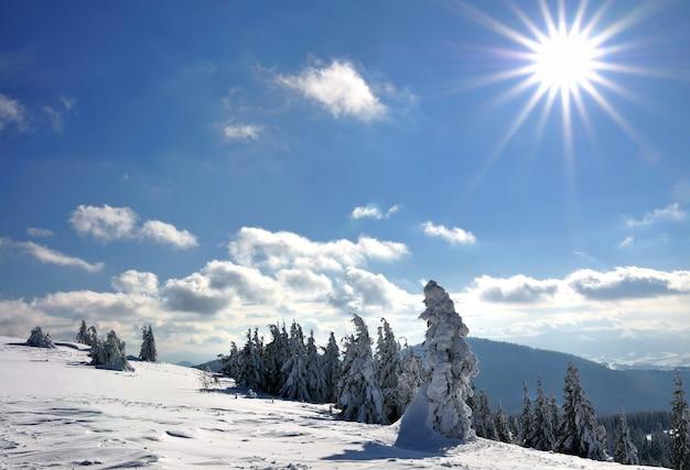 Zonnige dag in het naaldbos van de winter