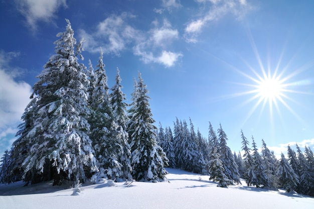 Zonnige dag in het winter forest