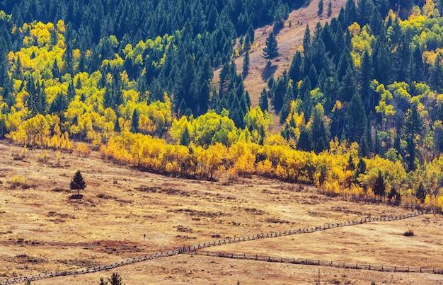 Zonnige herfst weide. natuurlijke achtergrond.